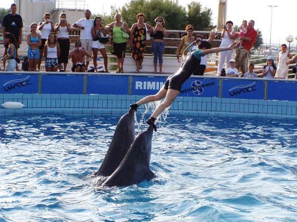 Дельфинарий в Римини